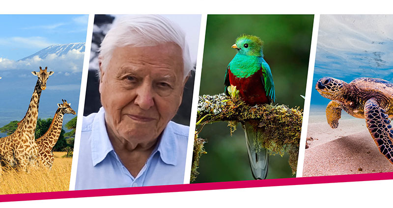 David Attenborough banner